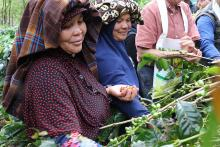 Photo of women farmers in Indonesia
