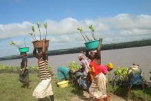 Winning the commitment of local communities, particularly women, is key to successful restoration campaigns in Limpopo Estuary, Mozambique.