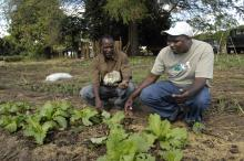 Crops - zambia