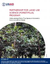 Under-planting Native Tree Species in Karnataka's Acacia auriculiformis Stands