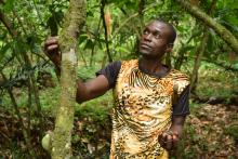 A man in a tiger-print shirt touches a tree and looks up while holding some of the tree's fruit in his other hand.
