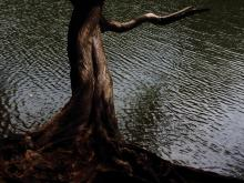 A burnt trees stands tall in front of the water of a dark lake.