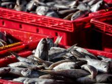 Fish in Nha Trang