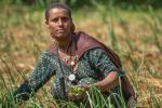 A female farmer kneels in a field of onions.