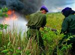 Peatland fires in Central Kalimantan