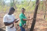 Field data collection for establishing tree cover monitoring service in Northern Ghana