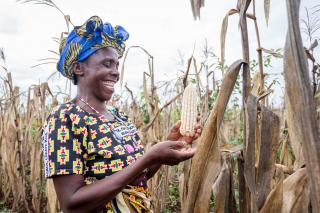 A woman in colorful clothing presents a corn specimen from her crop.
