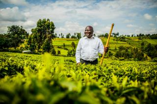 A man stands in a tea field, smiling and holding a walking stick.